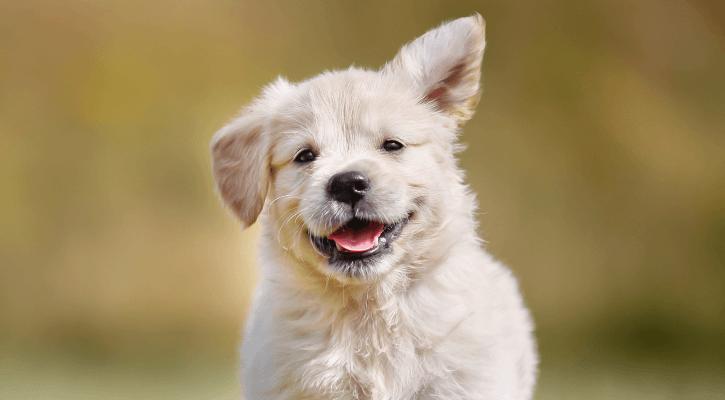 Wellness Care – Puppy